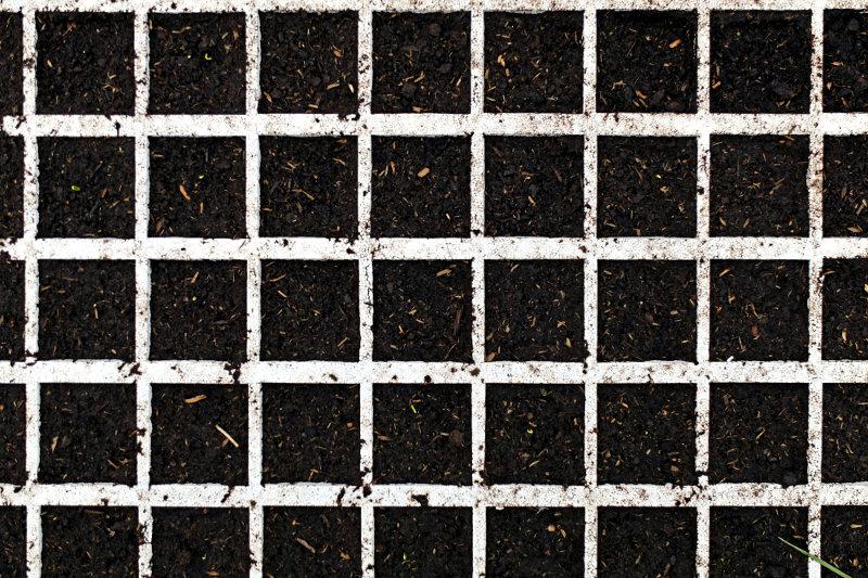Semis d'oignons en alvéoles - Ferme de Videau