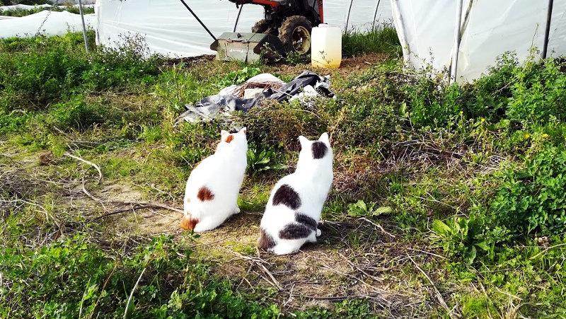 Chats de la ferme - Ferme de Videau