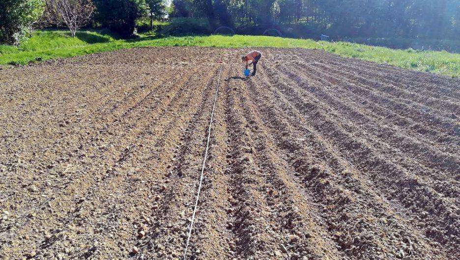 Plantation pommes de terre - Ferme de Videau